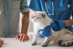 mammary tumors in cats 679043353