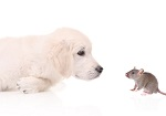 puppy dog and mouse
