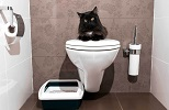train cat use a toilet